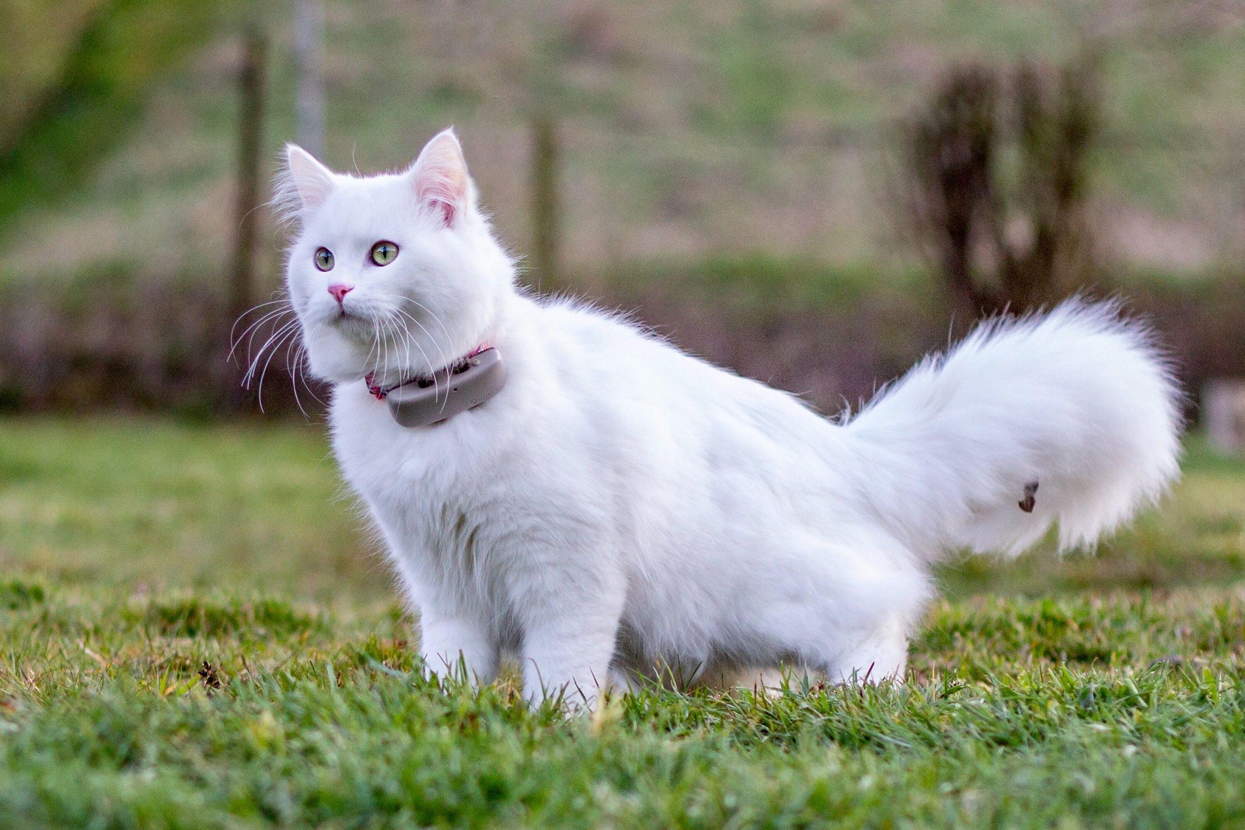 5-meilleur-traceur-gps-chat