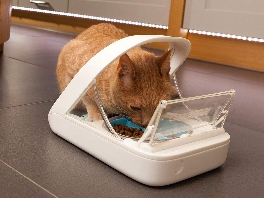 top5-distributeur-nourriture-chats-pas-cher