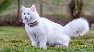Les 5 meilleurs colliers traceurs GPS pour chats