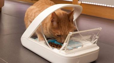 Les 5 meilleurs distributeurs automatiques de nourriture pour chats pas chers